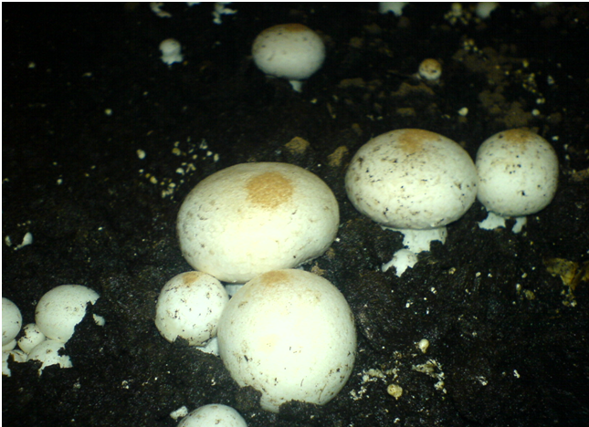 Болезни грибов